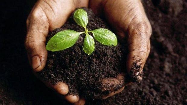 fondi-di-caffè-giardinaggio