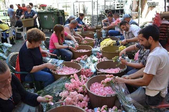 preparazione-petali-infiorata-genzano