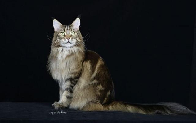 Gatti: i più belli del mondo il 19 e 20 ottobre sfilano a Spazio Reale Firenze