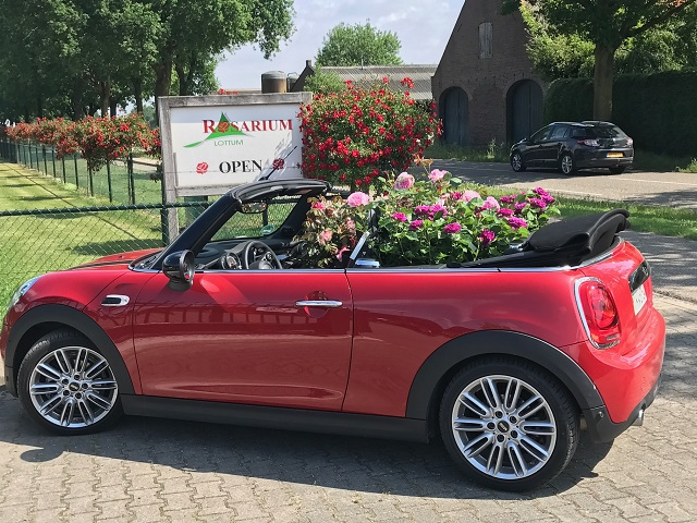 Non solo tulipani, l'Olanda si tinge di rosa nel Rozenhof di Lottum