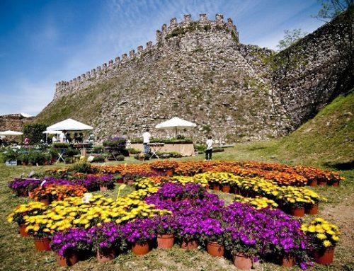 Fiori nella Rocca: mostra mercato di piante e fiori rari a Lonato del Garda