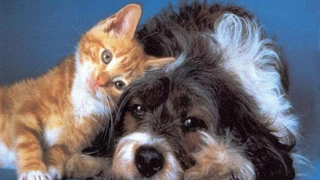 pet-therapy-cane-gatto-