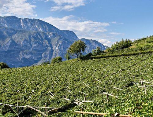 Cantina La-Vis: vini che sono espressione della sinergia tra uomo e vigna