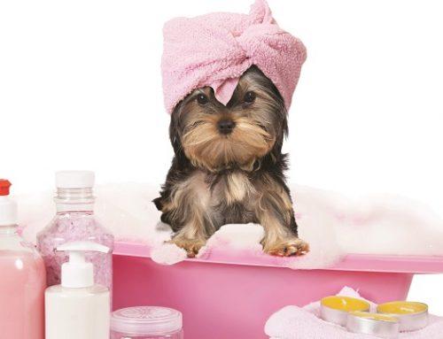 D.Dog Pet Beauty, il nuovo Brand per la toelettatura dei nostri animali
