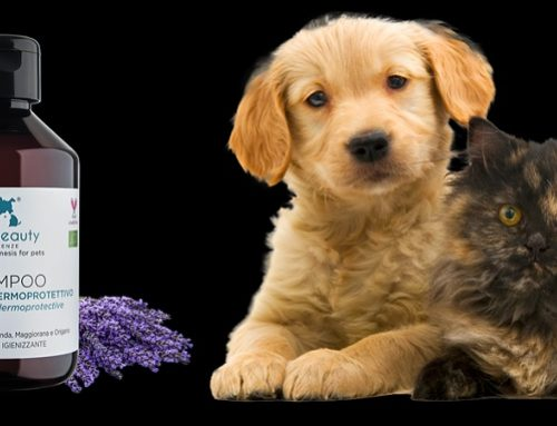 ElsaBeauty: l'esclusiva linea di Dermocosmetici Biologici per Animali