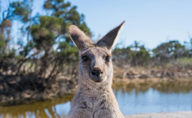 Australia da Oscar: viaggiare tra gli scenari più belli del cinema