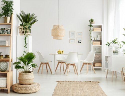 Come purificare l'aria di casa con le piante da interno