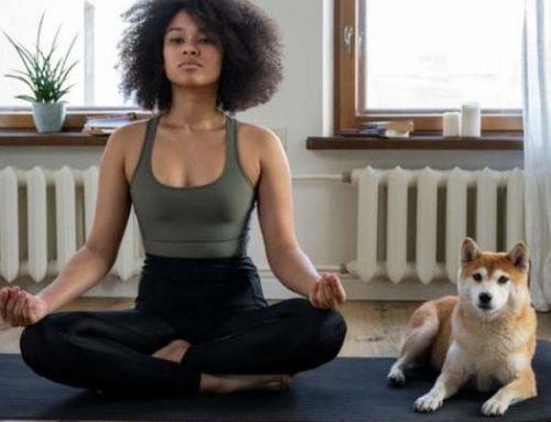 Mindfulness: a Quattrozampeinfiera si medita con il proprio pet
