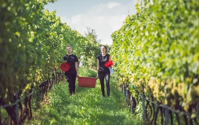 Villa Corniole: l'eleganza dei vini di montagna, una passione di famiglia