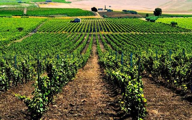 Vini siciliani: ottima l'annata 2020 grazie alla diversità dei territori